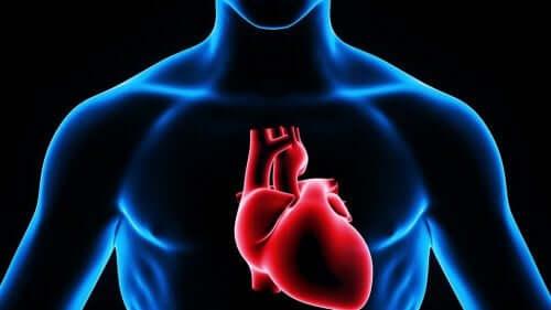 Computer afbeelding van het hart in het lichaam