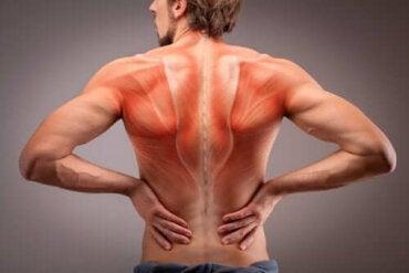 De anatomie van onze rugspieren