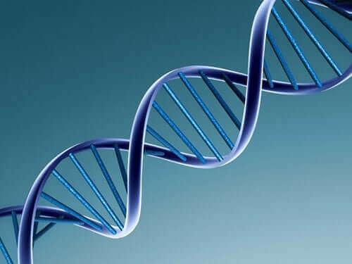 DNA van een virus