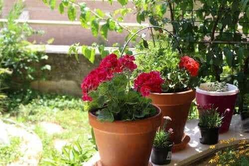 Zomerbloemen: zes mogelijkheden voor je tuin