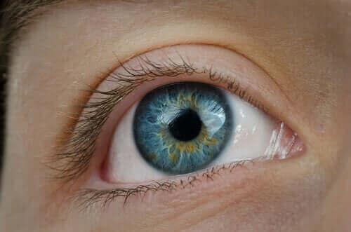 Een oog van dichtbij