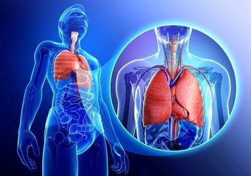 Een afbeelding van een mens met uitvergrote longen