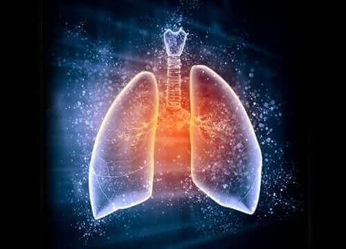 Een afbeelding van de longen