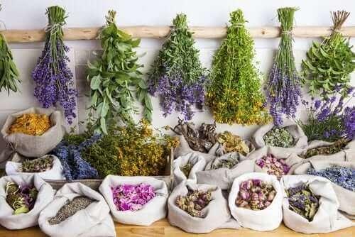 Wat zijn de voordelen van fytotherapie?