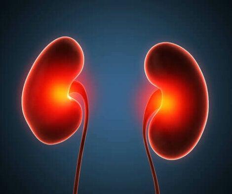 Een paar nieren