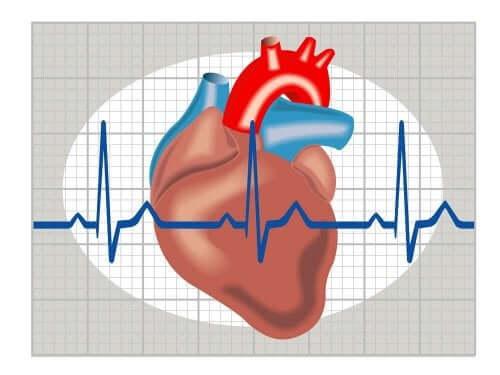 Weergave van het kloppen van het hart