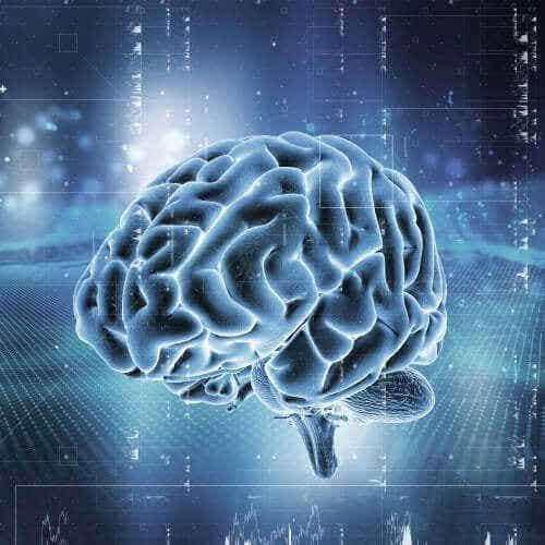 Het beloningssysteem van de hersenen: hoe werkt het?