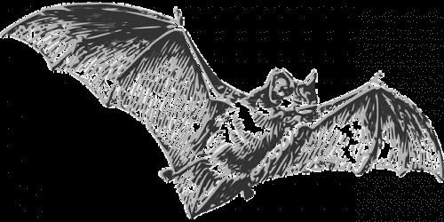 Vleermuizen zijn de oorzaak van het coronavirus
