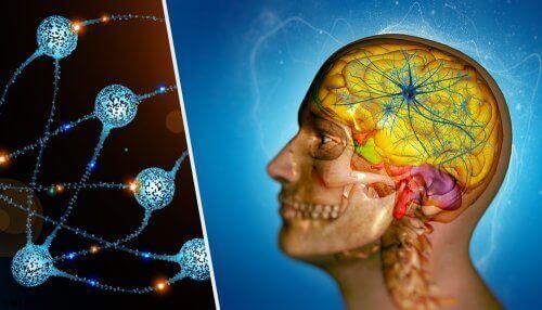 Een illustratie van een doorsnede van het hoofd en neuronen