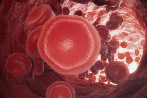 Stollingsproblemen: hoe werkt het bloedstollingsproces?