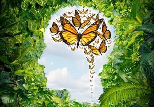 Een afbeelding van een hoofd met vlinders