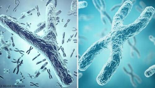 Vergroting van telomeren