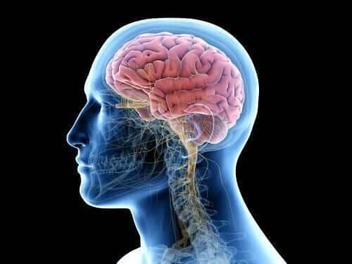 Encefalitis is een infectie in de hersenen