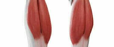 De spieren van de kuiten