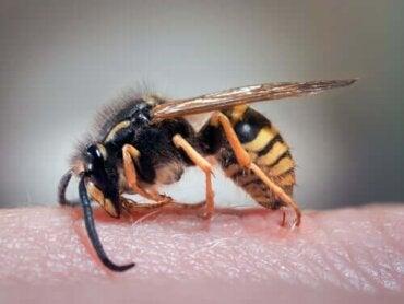 Thuismiddeltjes voor wespensteken