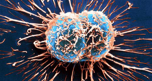 Hoe het immuunsysteem kanker bestrijdt