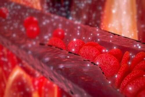 Illustratie van bloedvaten