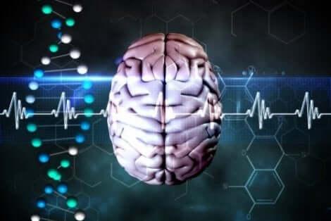Een brein