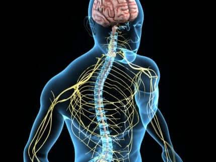 Het zenuwstelsel wordt beïnvloed door het syndroom van Horner