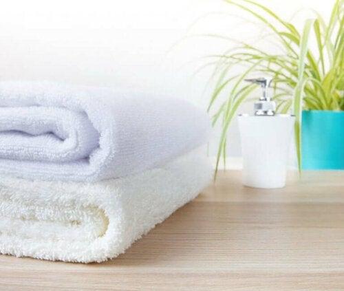 De beste planten voor je badkamer