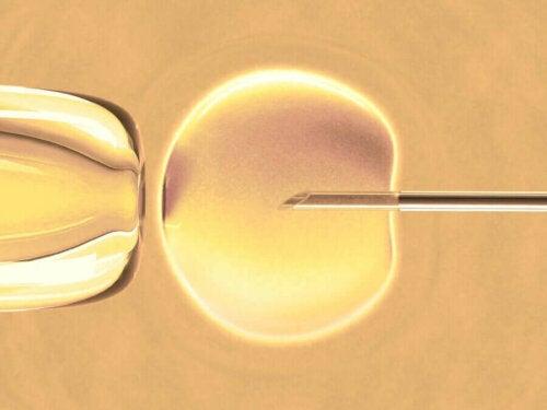 Weet jij wat in-vitrofertilisatie precies is?