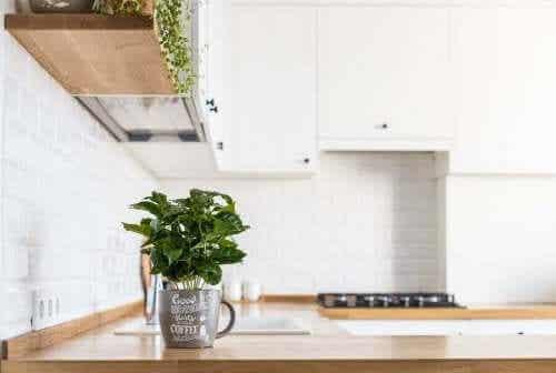 Hoe je verse kruiden in je keuken kunt kweken