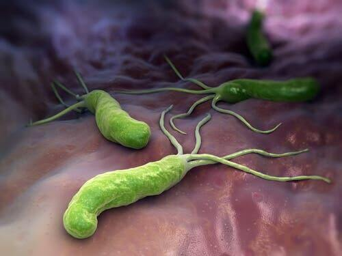 Bacteriën in het lichaam