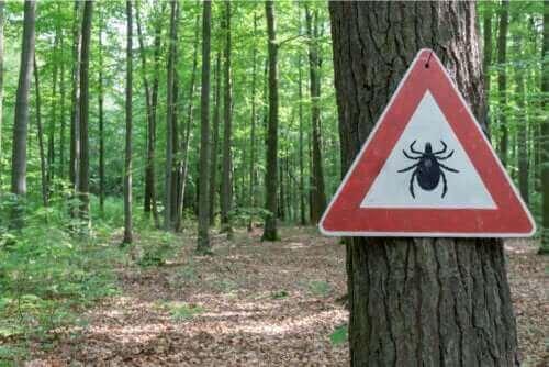 Behandeling van de ziekte van Lyme