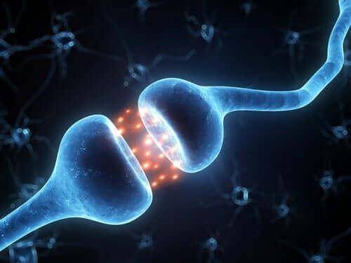 Neuronen die aan het werk zijn