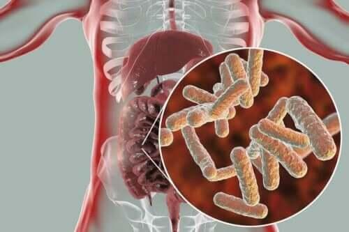 Darmen en ingezoomd op het microbioom