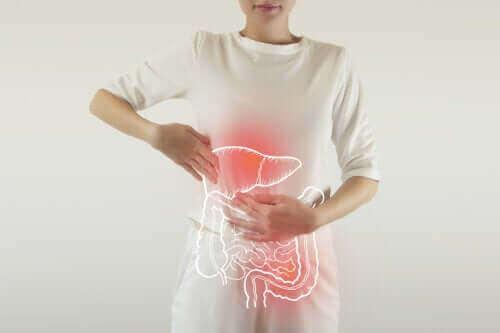 Waar dienen spijsverteringsenzymen voor?