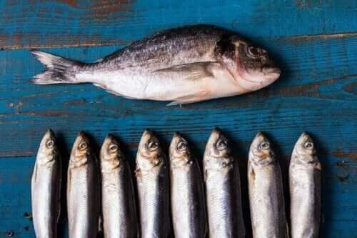 Vette vis is rijk aan omega 3-vetzuren