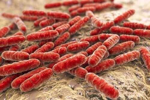 Bacteriën in de darm