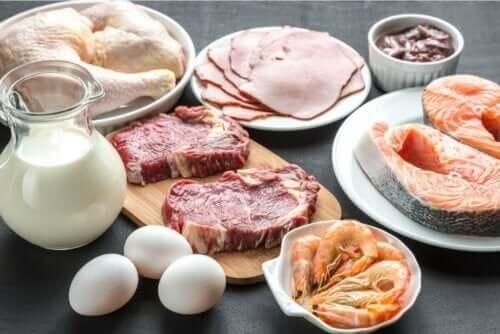 Dierlijke eiwitbronnen