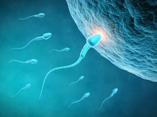 Hoe het eetpatroon de kwaliteit van sperma beïnvloedt