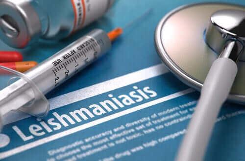 Wat is Leishmaniasis of zandmugziekte precies?