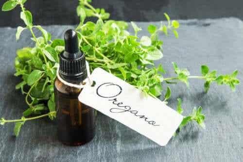 Zelf oregano-olie maken en de voordelen ervan