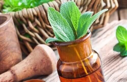 De 15 beste medicinale planten