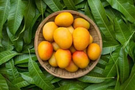 Een schaal mango's