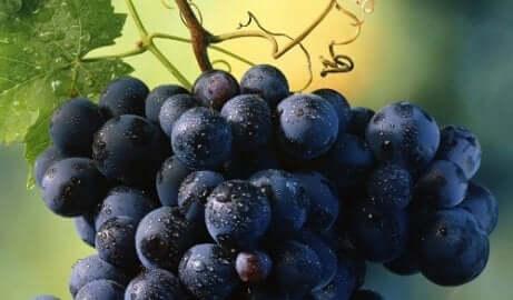 Een tros druiven