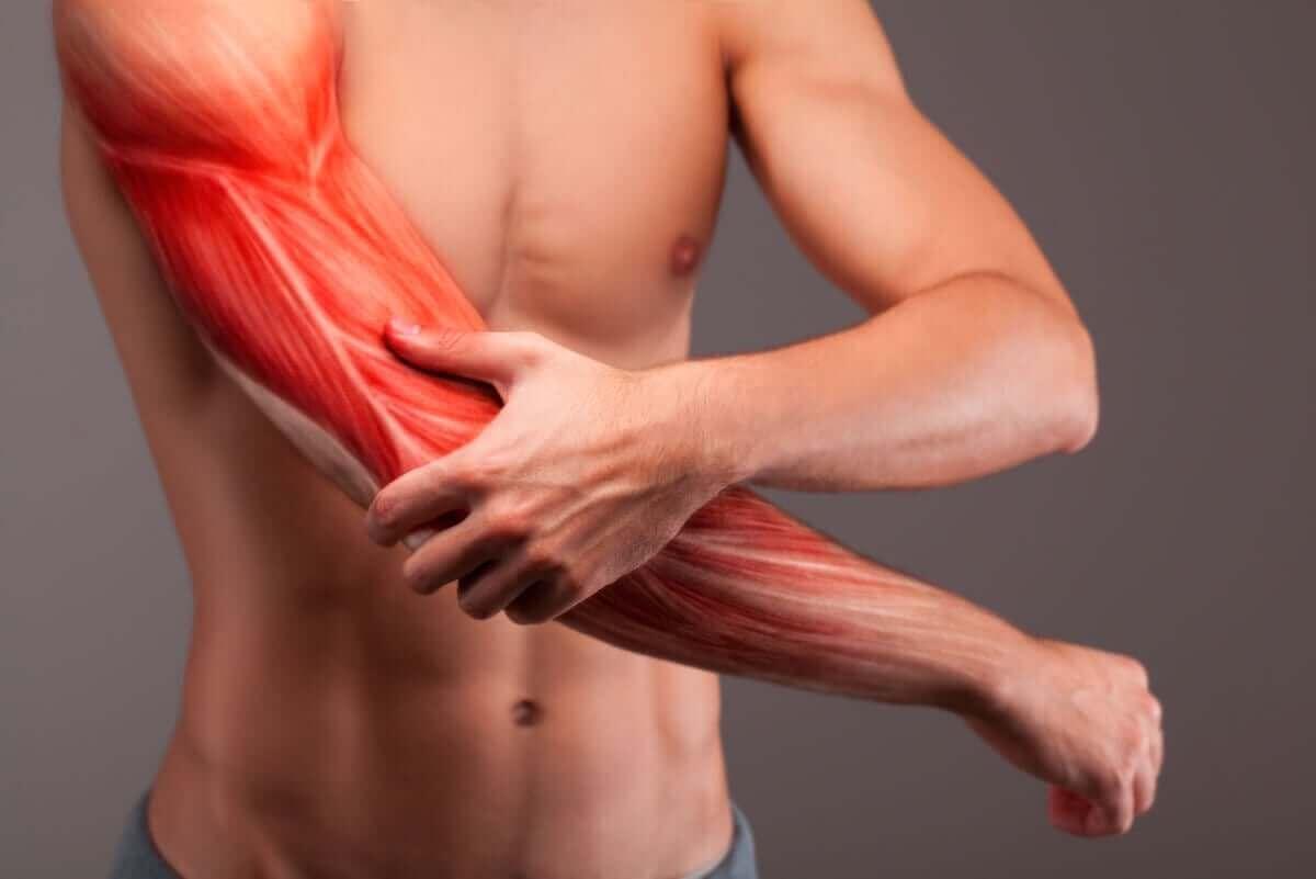 De spieren in een arm