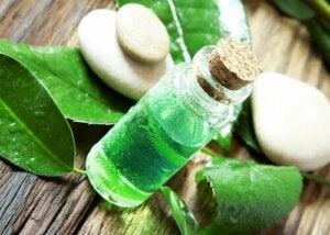 Tea tree olie tegen vlooien en teken