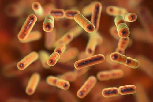 Hoe weet je of je darmmicrobiota is aangetast