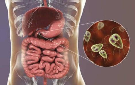 giardia ziekte hpv cancer markers