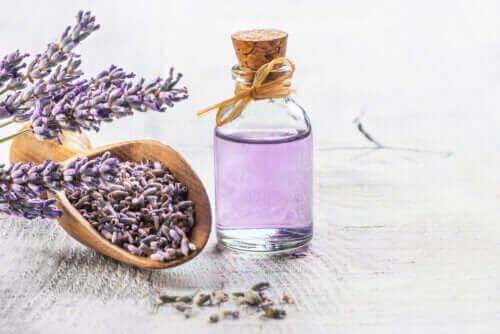 De 6 beste geneeskrachtige planten met wetenschappelijk bewijs