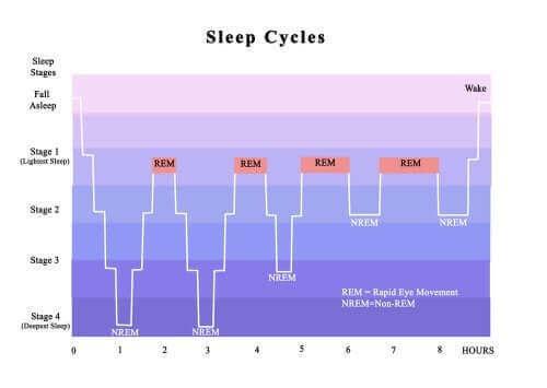 Fasen van slaap
