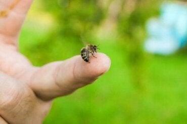 Wat te doen na een bijensteek?