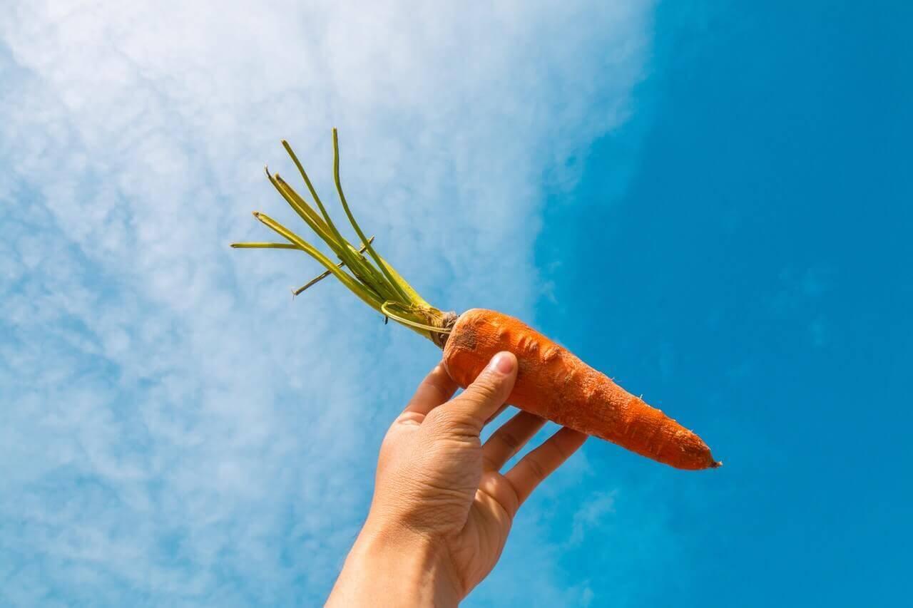 Iemand houdt een wortel omhoog