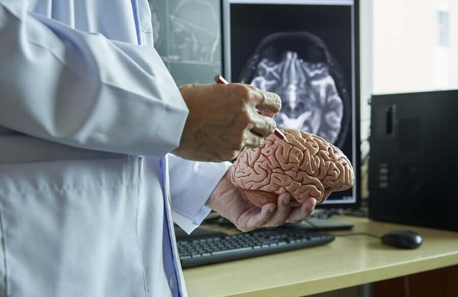 Een neuroloog die hersenen bekijkt