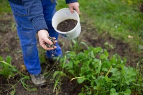 Een persoon die buiten zaden plant